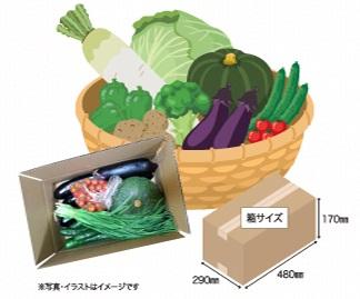 けんちゃんのお野菜セットの商品イメージ